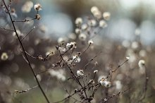 Wild flowers in macro
