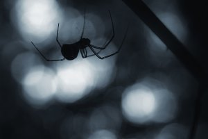 Spider on Halloween night