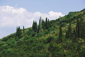 Mountain with evergreen forest