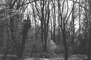 The Eery Woods