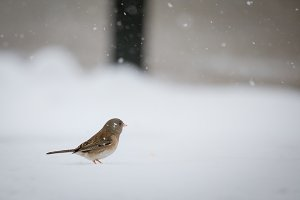 Tiny Bird with feet in snow