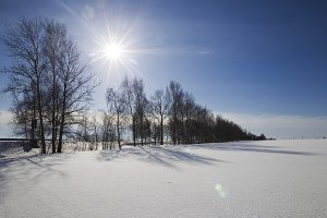Winter landscape of a sunny day