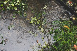 Raindrops in Creek