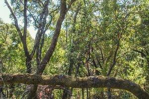 Fallen Tree (Photo)