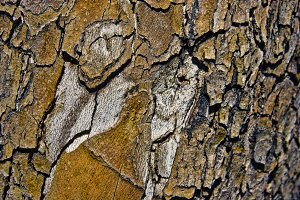 Cracked Bark Texture (Photo)