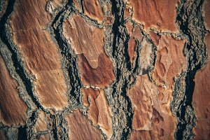 Plateaued Bark Texture 1 (Photo)