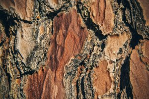 Plateaued Bark Texture 2 (Photo)