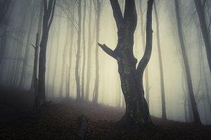 Dark mysterious Halloween forest