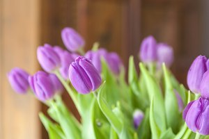 Pink tulips at home