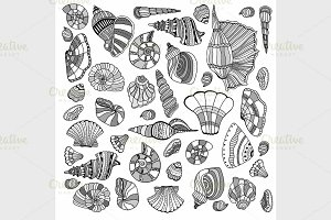 Seashell set collection