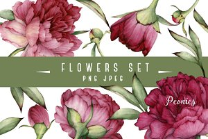 Set of isolated Peonies and leaves