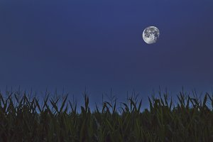 Moon Over Corn