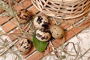 Quail eggs are in basket.