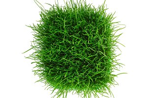 green grass isolated