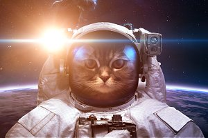 Brave cat astronaut at the spacewalk. This image elements furnished by NASA