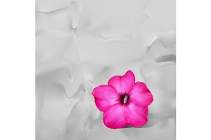 Desert rose flower on white paper