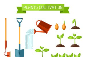 Plants cultivation.