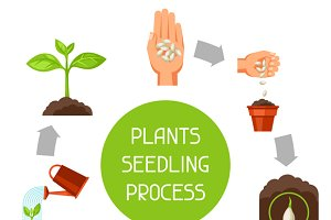 Seedling infographics.