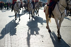 Horses parade in a city