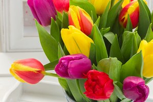 bouquet of  yellow, purple and red  tulips