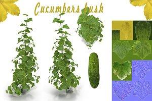 Cucumbers bush