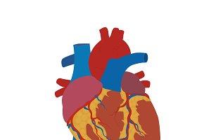 human heart, vector
