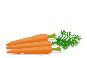 carrots, vector