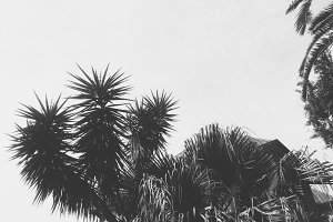 Black and White Palm Trees