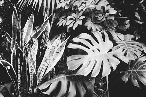 Black and White Tropical Plants