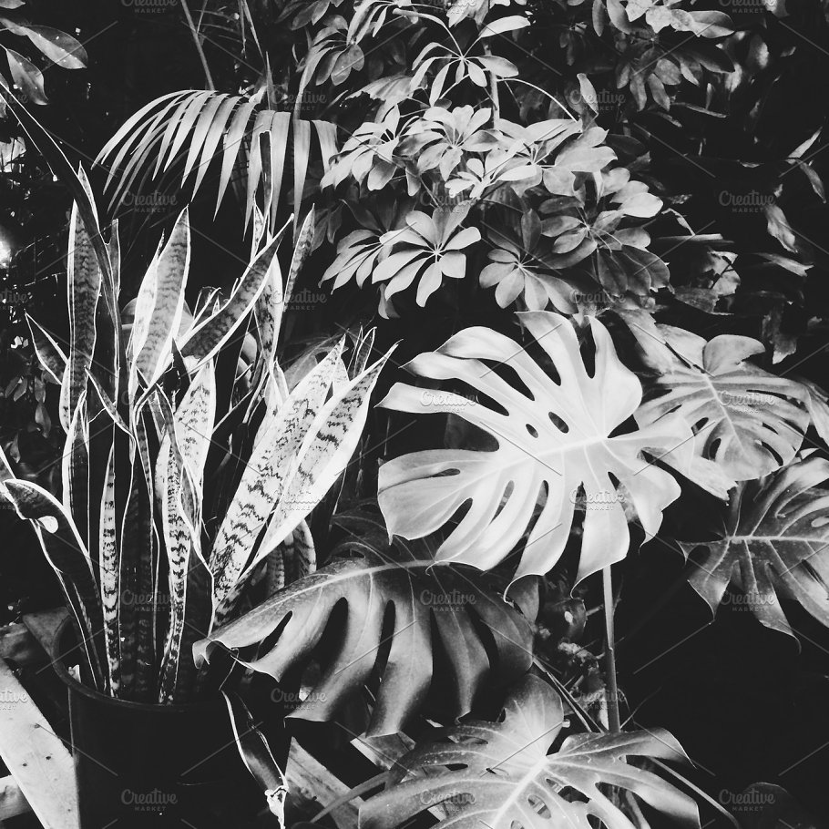 Black And White Tropical Plants Nature Photos Creative Market