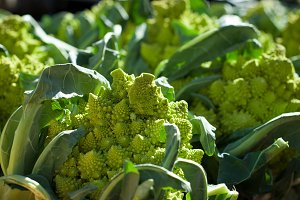 Romanesco broccoli for sale