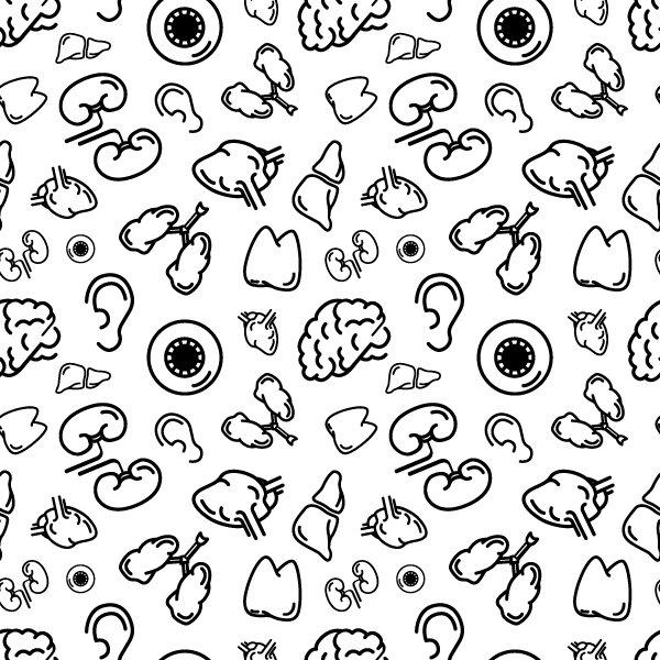 Human internal organs on white ~ Graphic Patterns ~ Creative Market