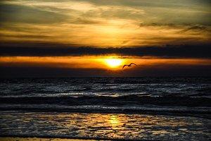 Sundown with seagull