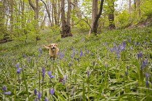 Lola in America Woods