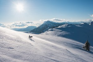 Dog playing in winter mountains