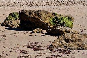 sand, rock and green algae