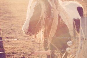 Horse in Springtime Sun