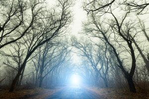 Forest in fog with road in autumn