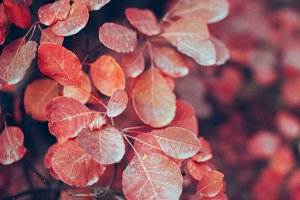 Autumn nature background with leaves