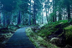 Wooden paths in the deep forest