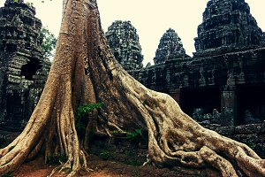 Giant Roots in Angkor Wat, Cambodia