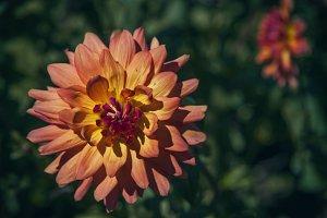 Bursting Floral (Photo)