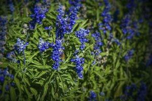 Pollinating Purple Flowers (Photo)