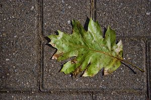 Leaf and Masonry (Photo)