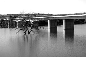 Black & White Bridge