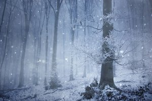 Forest in winter with snow falling