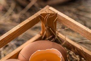 Fresh brown broken egg