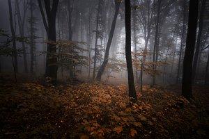 Autumn forest with dark fog