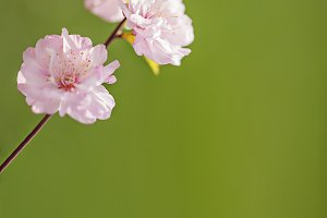 Sunny spring green background with p