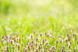 Sunny spring green grass and pink fl